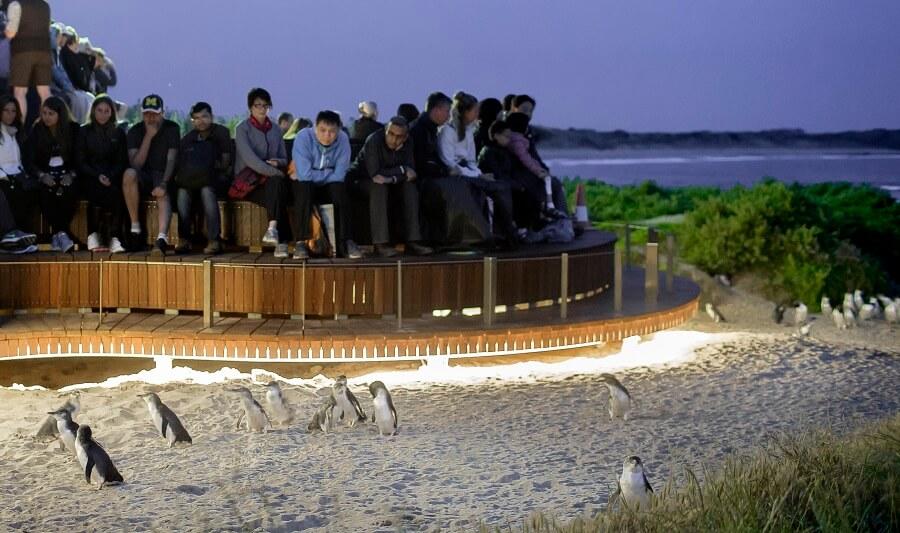 Penguins Plus Viewing Platform