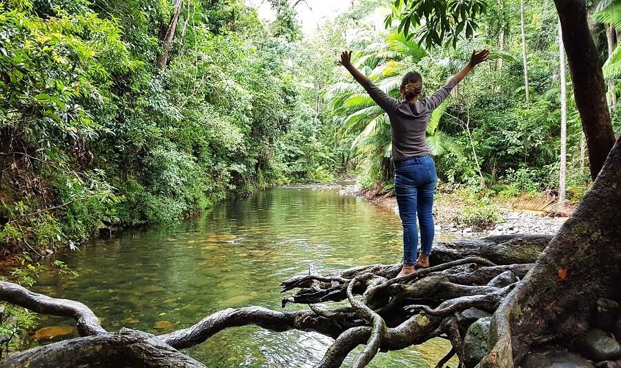 Guided rainforest walk