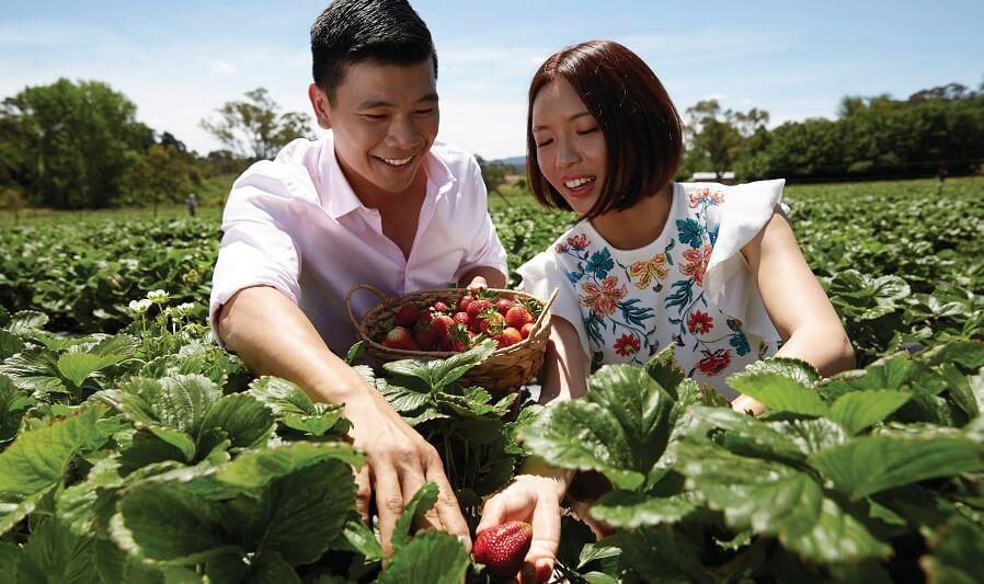 Beerenberg Strawberry Farm