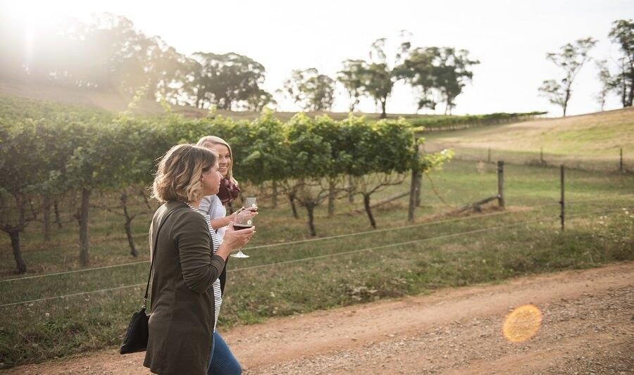 Explore the Yarra Valley Vineyards
