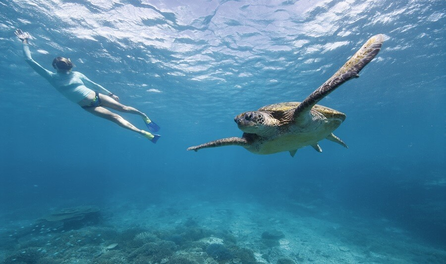 Wildlife encounter on the Great Barrier Reef