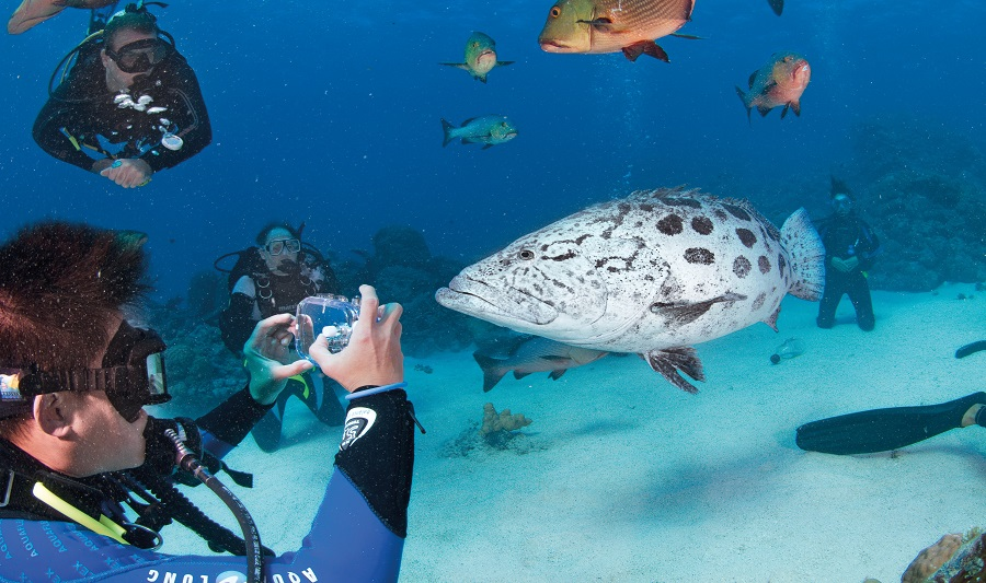 Wildlife spotting on the Great Barrier Reef