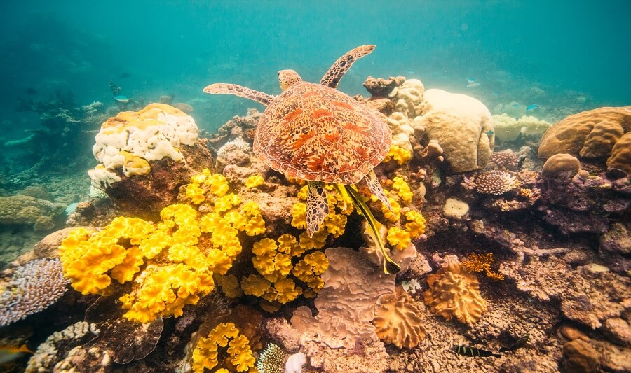 Wildlife spotting in Hastings Reef