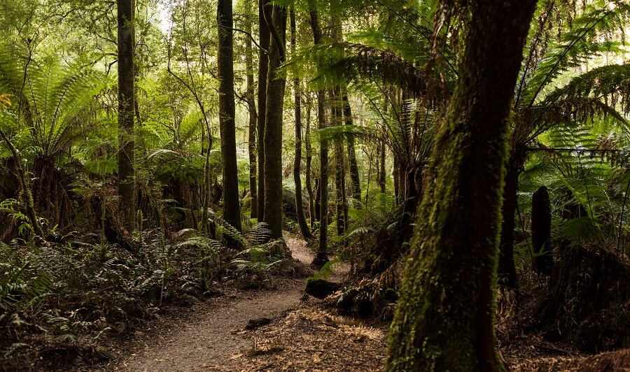 Maits Rest Rainforest