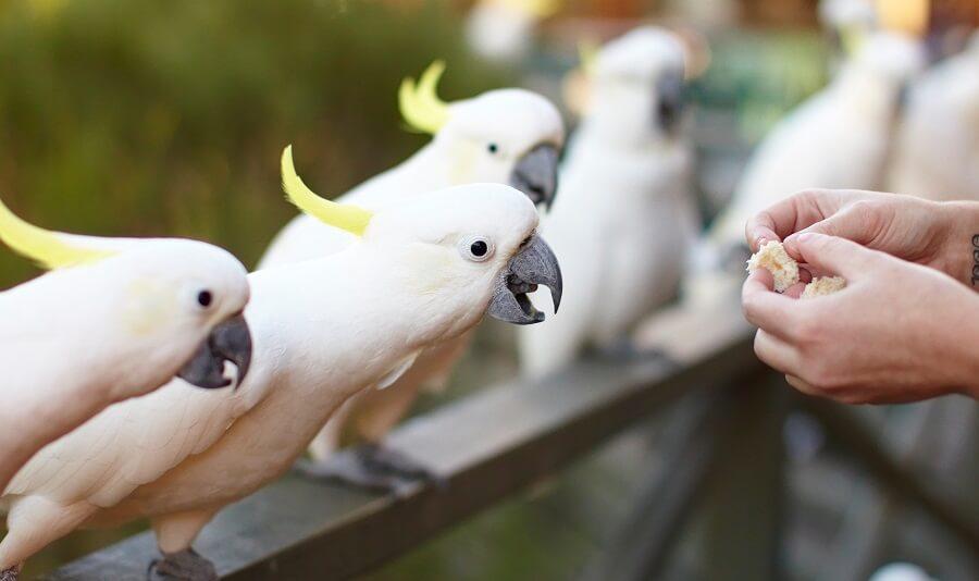 Feeding Birdlife