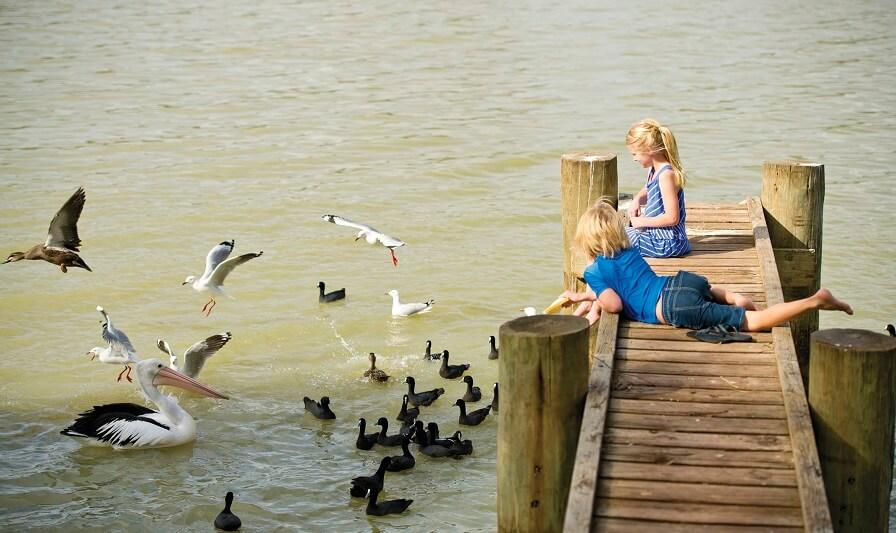 Feeding Ducks - Mannum