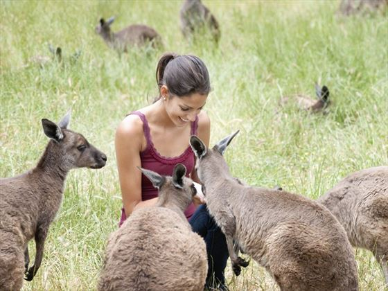 Which wildlife should you keep an eye out for at Kangaroo Island?