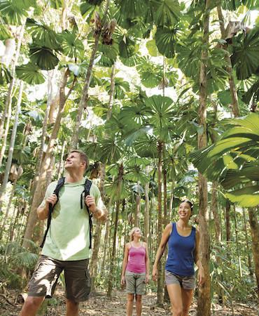 Daintree Rainforest & Cape Tribulation