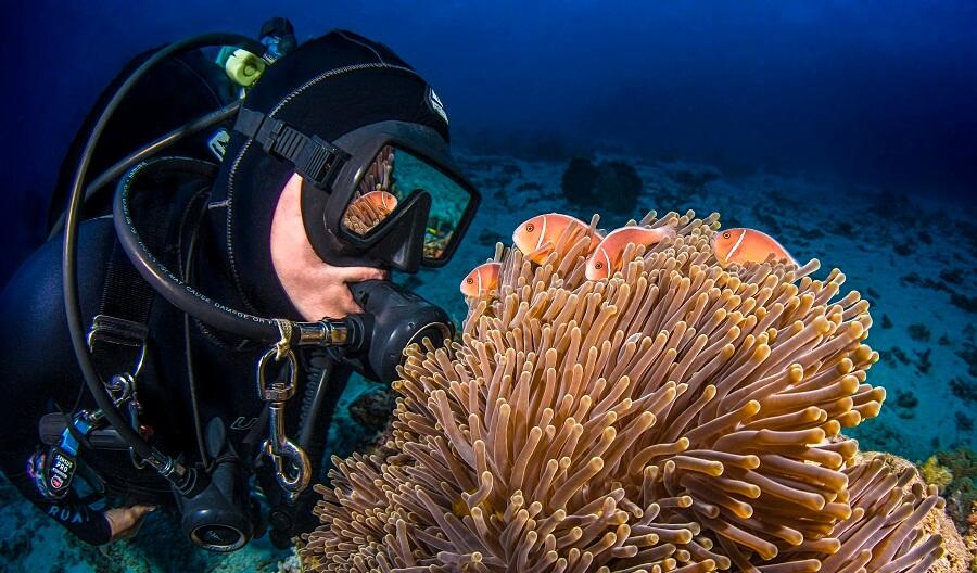 Scuba Diving - Anemone
