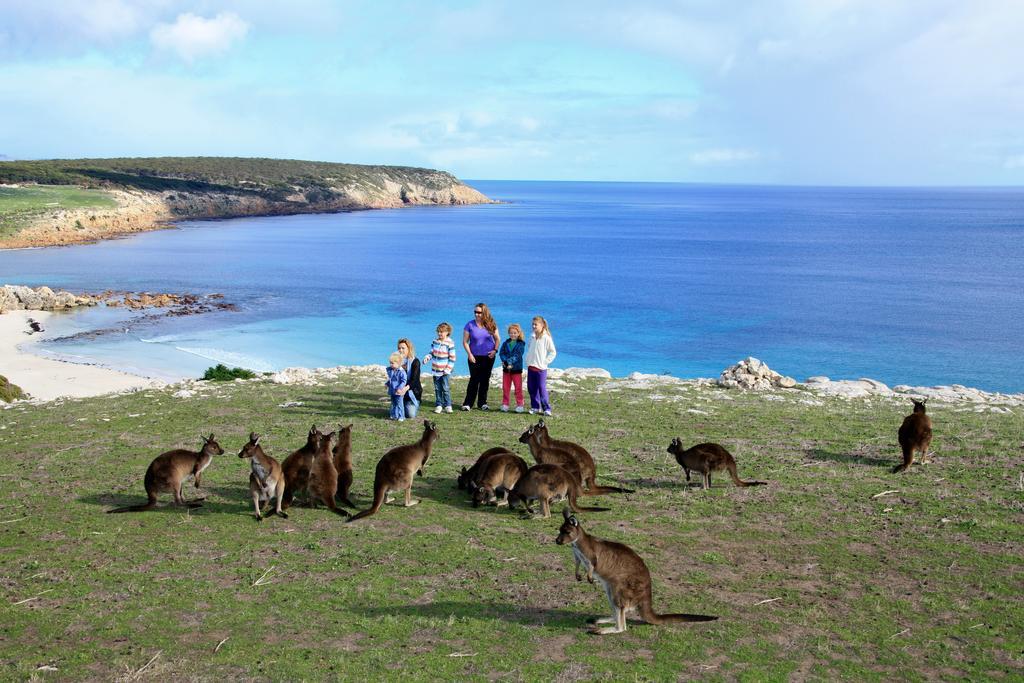 How did Kangaroo Island get its name?