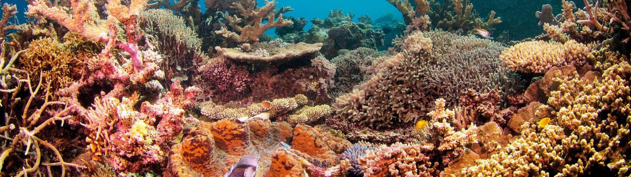 Where is the best place to visit on the Great Barrier Reef?