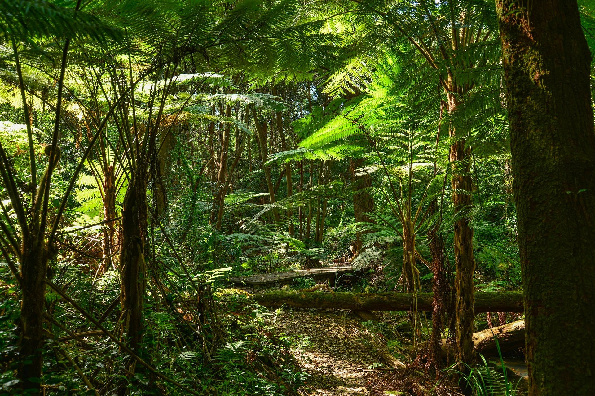 Visit the Great Otway National Park