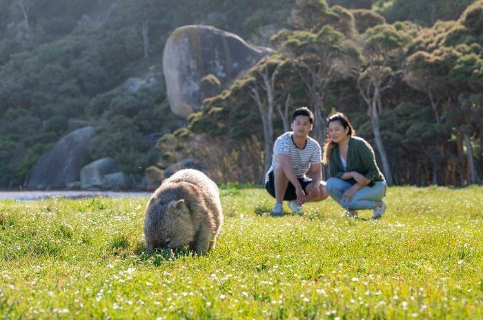 Wildlife encounters - Wombat