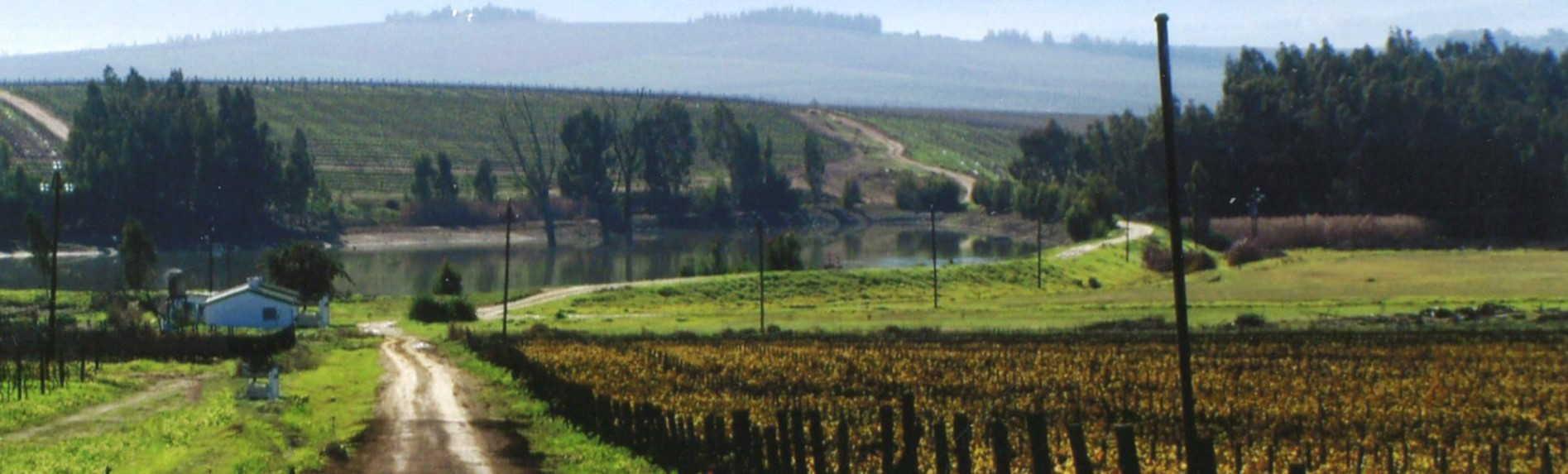 Best Wine Regions Near Melbourne
