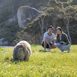 2 DAY WILSONS PROM & PHILLIP ISLAND WILDLIFE, PENGUINS & NATURE TOUR
