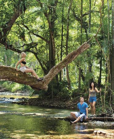 Daintree Rainforest Cape Tribulation