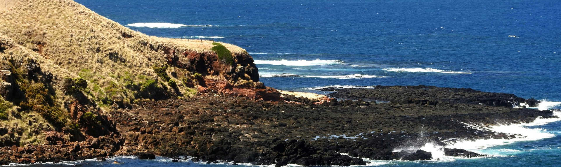 When can you see Fairy Penguins on Phillip Island?