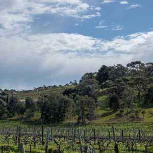 Where can I go for a day trip from Adelaide?
