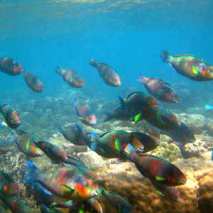 What is the best reef tour in Cairns?